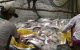 Các loại thức ăn cho cá mang lãi suất cao